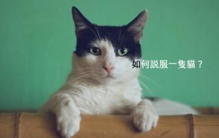 【嘉鴻筆記】如何說服一隻貓? 3