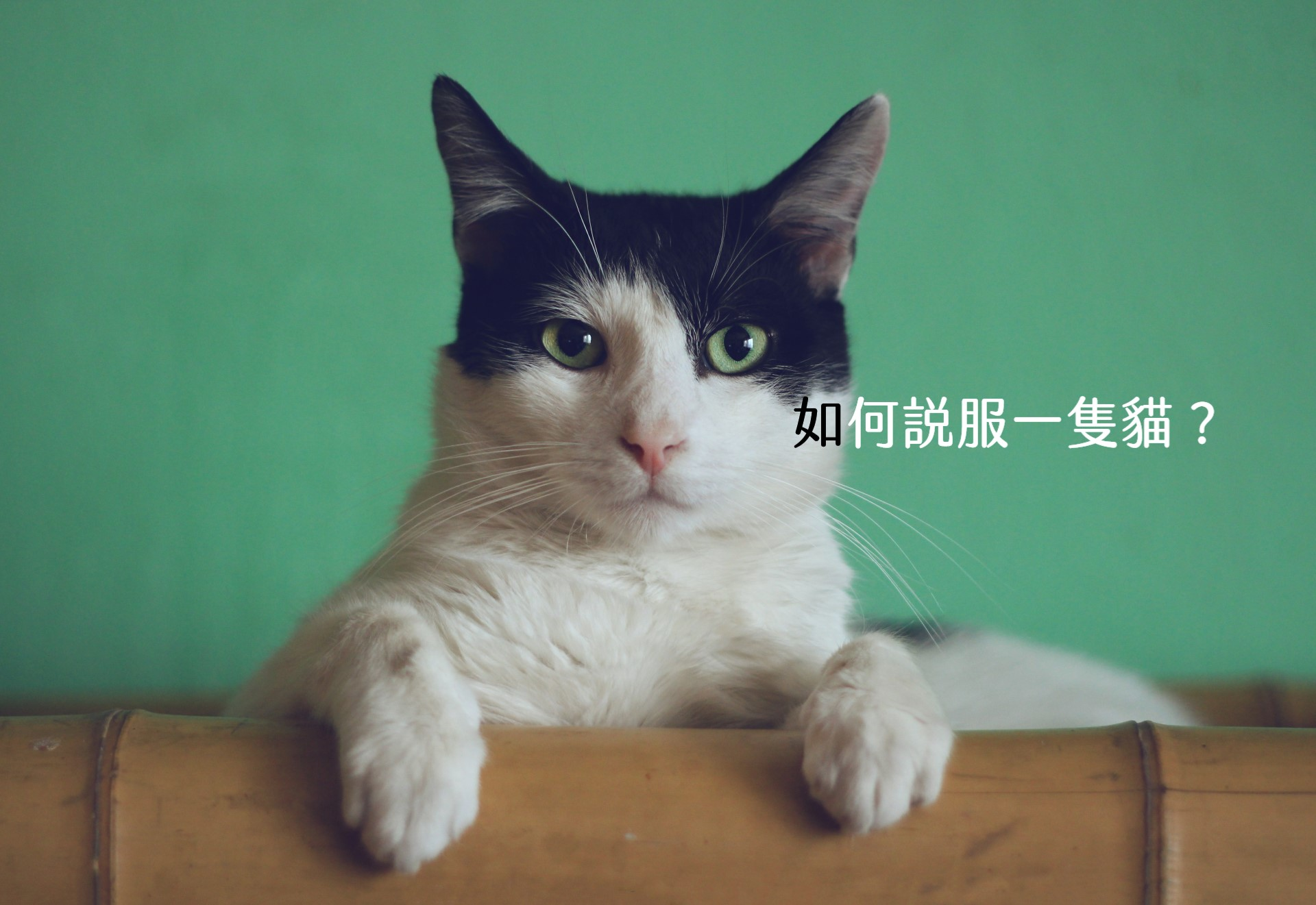 【嘉鴻筆記】如何說服一隻貓? 4
